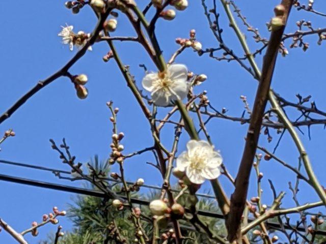 花粉症で悩まされる季節になりました
